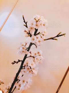 花,桜,枝