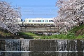 自然,風景,春,桜,屋外,電車,水面,JR,鉄道,さくら,JR西日本,佐保川