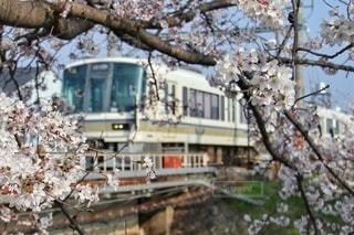 自然,風景,花,春,桜,屋外,電車,鉄道,桜の木,さくら