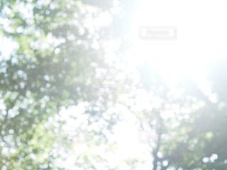 夏,木,太陽,森,光,樹木,光合成