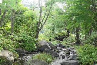 自然,風景,夏,屋外,緑,水,水面,樹木,岩,涼しげ,さわやか,草木