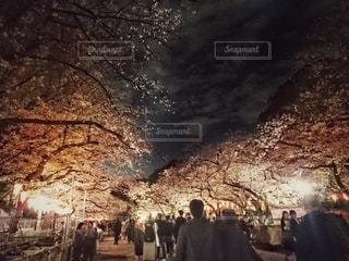 花,春,桜,木,花見,夜桜,お花見,イベント,上野公園