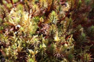 春,緑,植物,光,お花見,苔,神秘的,こけ