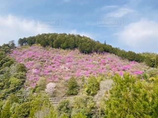 自然,風景,空,花,春,木,屋外,ピンク,白,綺麗,枝,山,景色,樹木,新緑,ツツジ,草木,クラウド,つつじ,山ツツジ,山つつじ