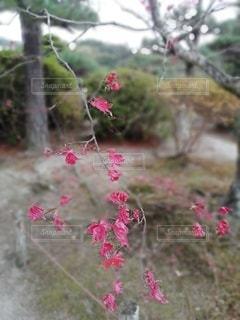 自然,花,屋外,ピンク,草,樹木,可憐