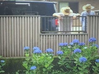 庭仕事の写真・画像素材[3395527]
