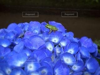 カエルの休憩の写真・画像素材[3396253]