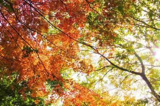 空,秋,森林,屋外,オレンジ,秋空,草木
