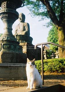 猫,屋外,座る,寺