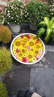 花,屋外,水,黄色,アート,観葉植物,草木,ヒマワリ