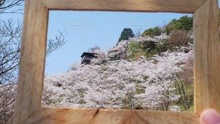 桜,晴れ,青空,花見,満開,写真,展望台,木のフレーム,蘭丸ふる里の森