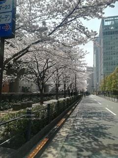 花,桜,屋外,樹木,都会,道,通り,日中