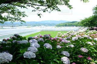花園のクローズアップの写真・画像素材[3056357]
