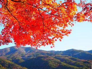 山とカエデの写真・画像素材[3050413]