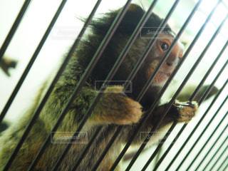 猿,動物,動物園