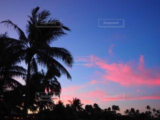 空,太陽,砂浜,樹木,ヤシの木,ハワイ