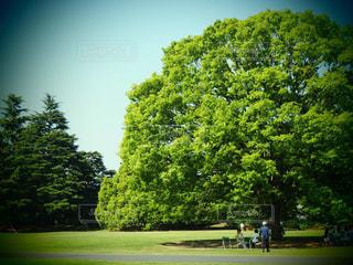 家族,空,公園,屋外,樹木,ピクニック,新緑,草木