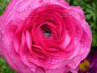 花,ピンク,赤,鮮やか