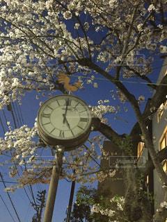 桜,時計,公園の時計