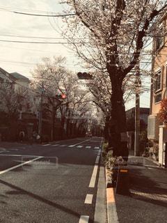 桜,屋外,樹木,通り