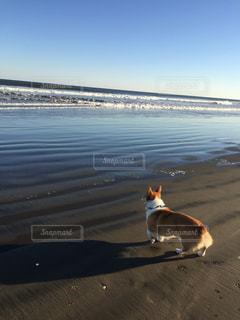 犬,自然,空,ビーチ,海岸
