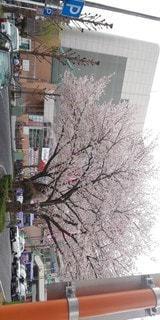 建物,花,春,屋外,樹木,明るい
