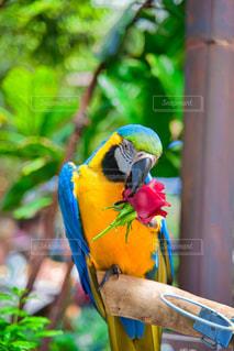 動物,鳥,屋外,黄色,座る,インコ,カラー,オウム,腰掛け,コンゴウインコ