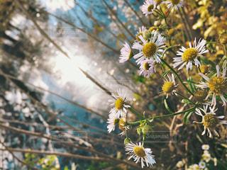 自然,風景,空,公園,花,春,お花畑,屋外,太陽,白,カラフル,きれい,青,黄色,季節,お花,樹木,写真,明るい,草木