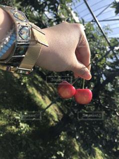 さくらんぼを持つ手の写真・画像素材[3055806]