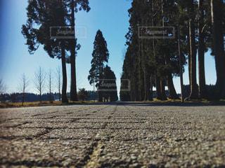 街路樹の写真・画像素材[3079209]