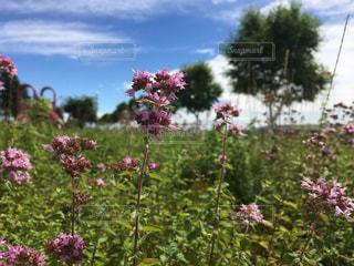ピンクの花の写真・画像素材[3079373]