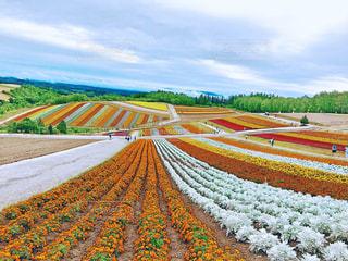 カラフルなお花畑の写真・画像素材[3079504]
