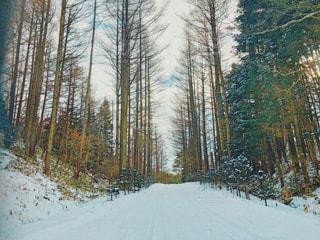 雪に覆われた木の写真・画像素材[3081473]