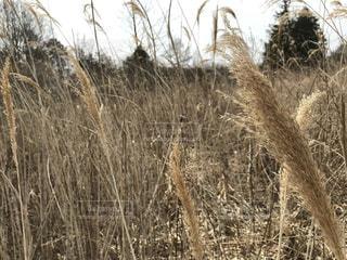 草っ原の写真・画像素材[3084974]