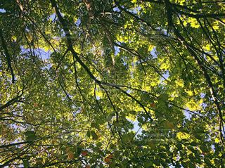 森の中の木々の写真・画像素材[3144775]