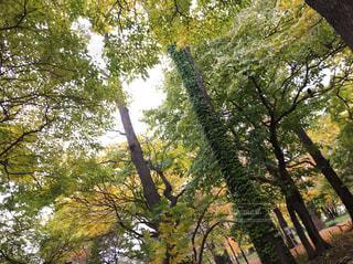 大きな木の写真・画像素材[3144772]