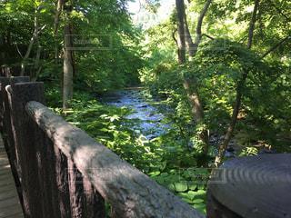 緑の公園の写真・画像素材[3144776]