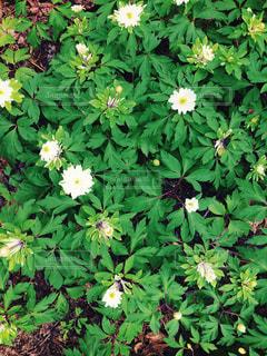 花園の写真・画像素材[3182194]