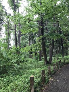 森の真ん中にある木の写真・画像素材[3205744]