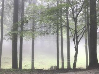 三峯神社にての写真・画像素材[3490044]