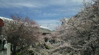 春,桜,新幹線