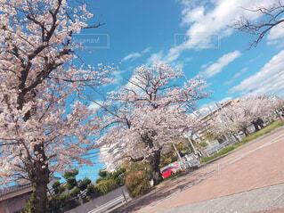 空,花,春,屋外,樹木,桜の花,さくら