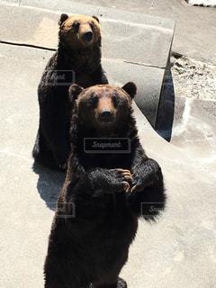 動物,屋外,立つ,クマ,熊牧場