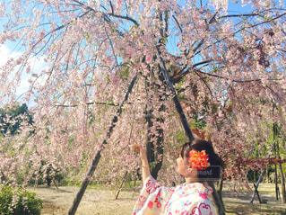 女性,花,春,花見,着物,人,和装,さくら,桜日和