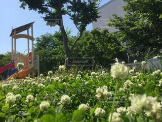 空,公園,花,屋外,樹木,草木