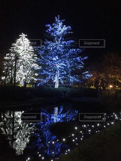 夜,屋外,水面,樹木,クリスマス