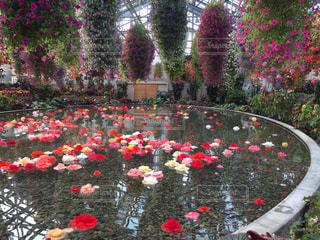 花,鮮やか,樹木,カラー,草木,日中,ガーデン