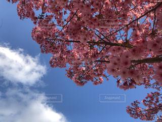 自然,空,春,青い空,桜の花,さくら