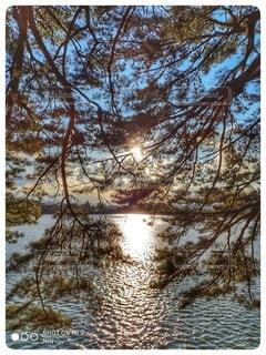 自然,風景,冬,屋外,湖,水面,池,樹木