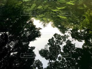 鏡花水樹の写真・画像素材[3059157]